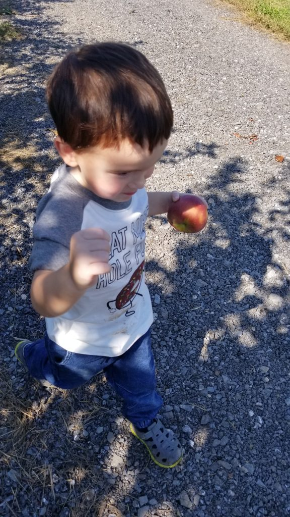 apple picking with family