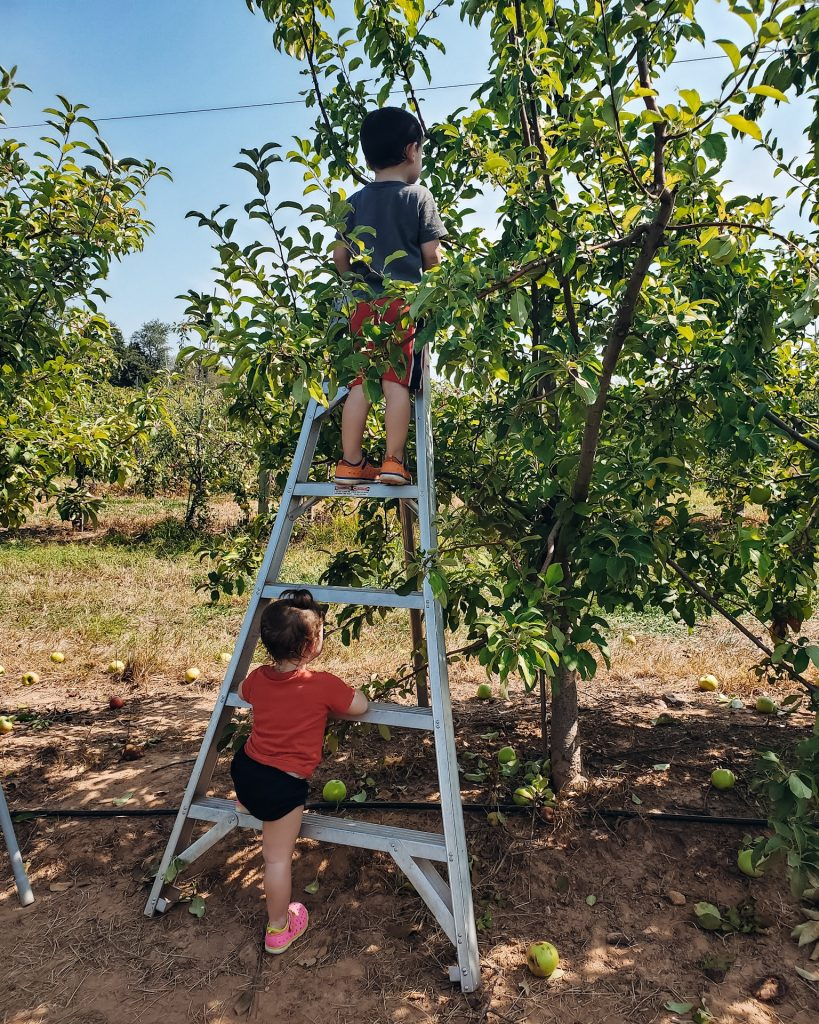 apple picking budget friendly fall activities for families